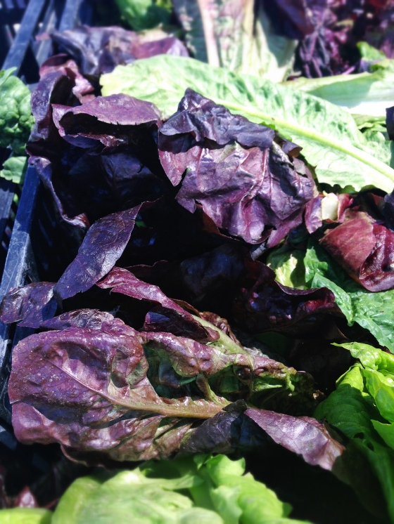 Purple lettuce