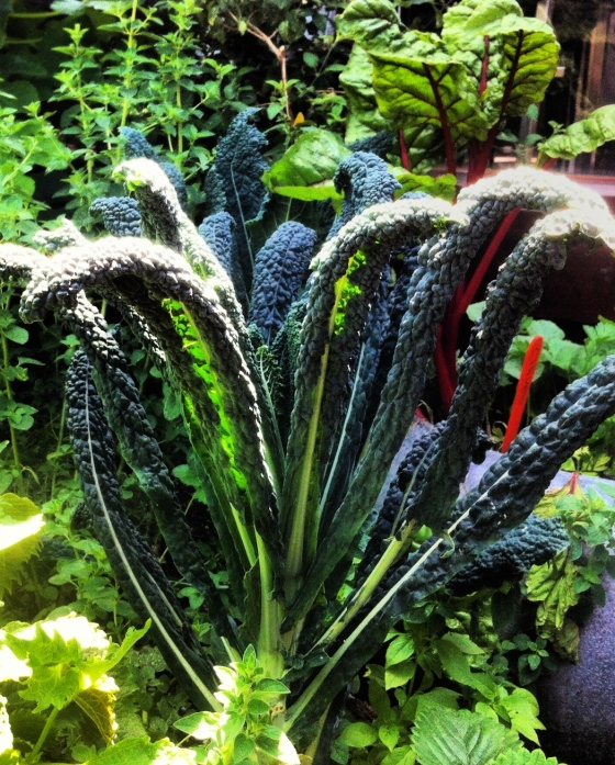 dino kale garden